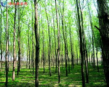 茂密的小树林,天然的氧吧